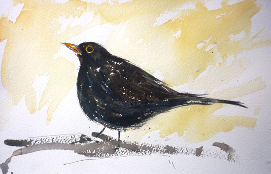 Plump Blackbird