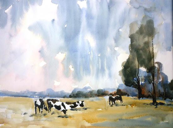 Cows in summer field